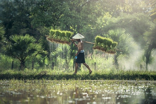 Reis – Was gibt es denn dazu noch zu wissen?